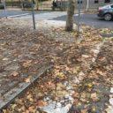 El PP municipal pide que se refuerce la limpieza de hojas de las calles
