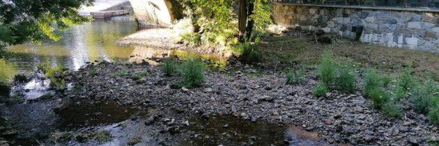 El Grupo Municipal Popular reclama la limpieza del Azud de San Marcos